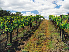 In the Margaret River region, home to world-class wineries