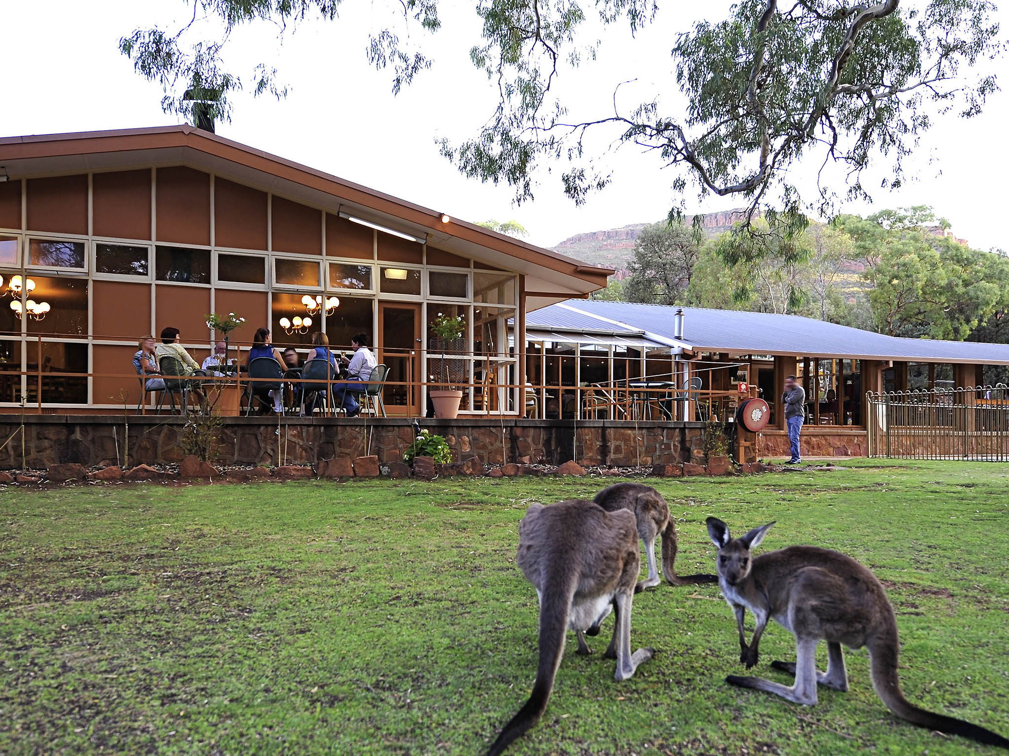 酒店 – Wilpena Pound Resort