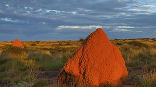 Avustralya - Exmouth Oteller
