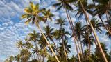 フィージー諸島 - ナンディ ホテル