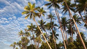 Wyspy Fidżi - Liczba hoteli Nadi