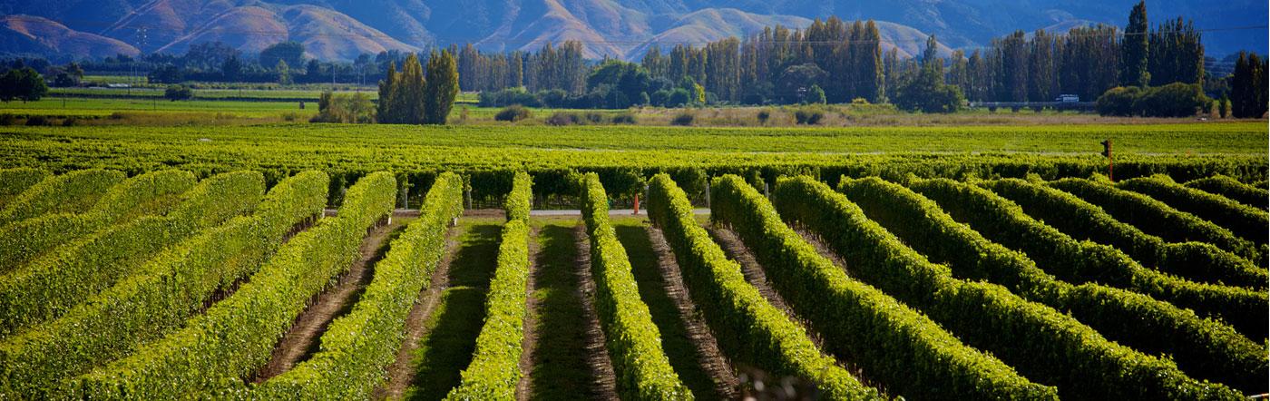 Nueva Zelandia - Hoteles Nelson