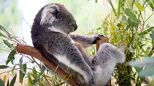 Australia - Liczba hoteli Kangaroo Island