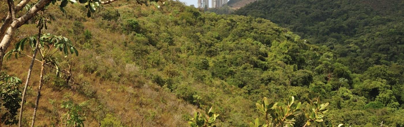 Brazylia - Liczba hoteli Lagoa dos Ingleses