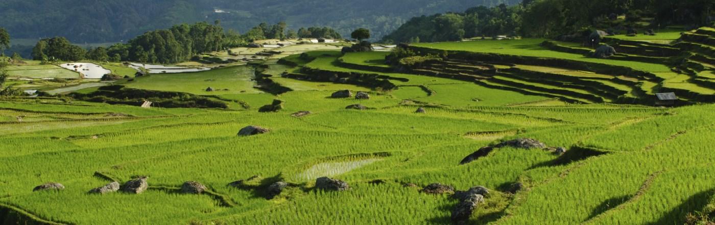 Индонезия - отелей Палу