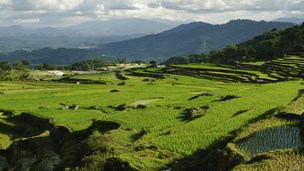 Indonesia - Hoteles Palu