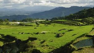 Indonésia - Hotéis Palu