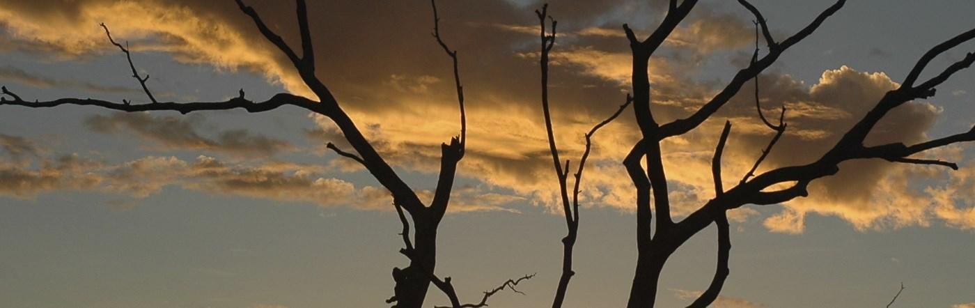 Avustralya - Paget Oteller