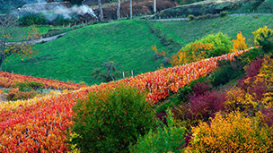 Fransa - Villefranche Sur Saone Oteller