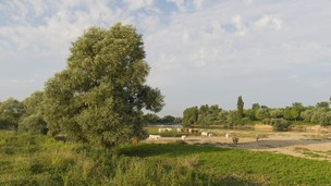 Fransa - Sochaux Oteller