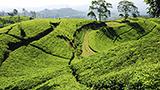 Endonezya - Bandung Oteller