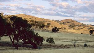 Australia - Liczba hoteli Canberra