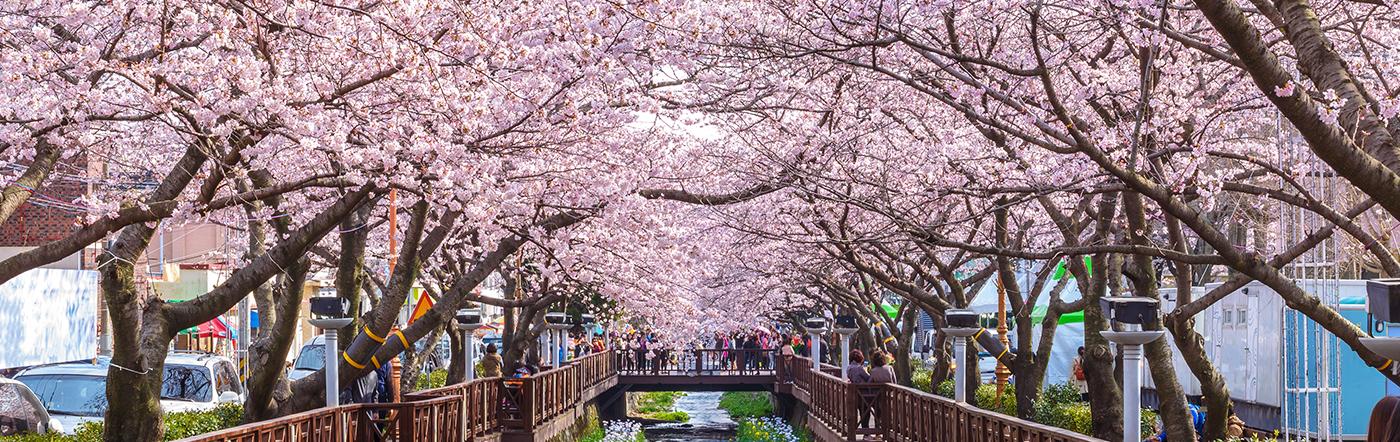 Coréia do Sul - Hotéis Changwon