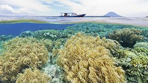 Endonezya - Manado Oteller