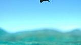 Fransız Polinezyası - Nunue Oteller