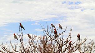 Avustralya - Karratha Oteller