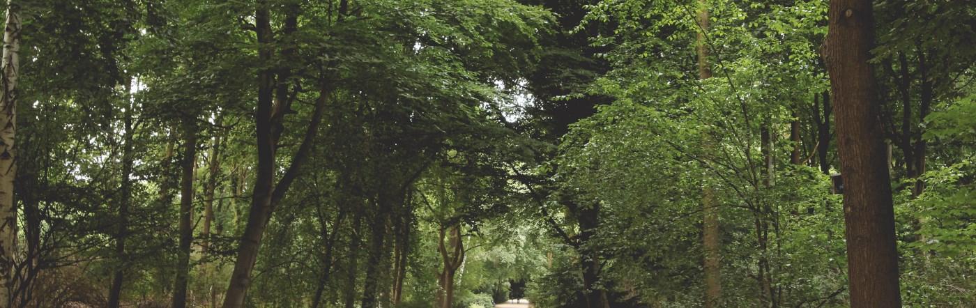 Almanya - Dahlwitz Hoppegarten Oteller